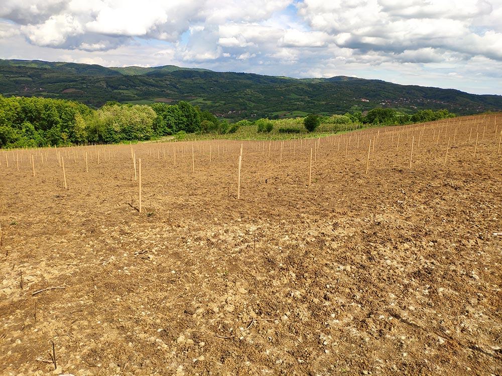Novi zasadi u vinariji Lastar